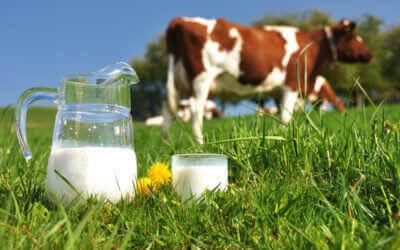 Αγελαδινό γάλα: Αιτία αυτισμού;