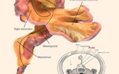 Οι επιστήμονες ανακάλυψαν νέο όργανο στο ανθρώπινο σώμα!