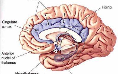 Μεταιχμιακό σύστημα και GABA: Καταπολέμηση του στρες και του άγχους