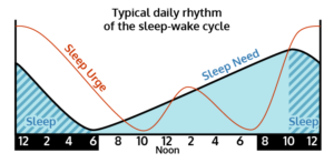 circadian-rhythm-and-fatigue