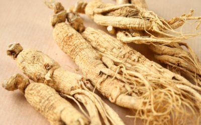 Panax ginseng: Το σημαντικότερο προσαρμογόνο βότανο και τα οφέλη του για την υγεία