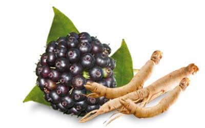 Σιβηριανό ginseng: Ένα προσαρμογόνο βότανο με πολλαπλά οφέλη για την υγεία μας
