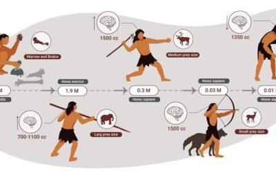 Οι άνθρωποι ήταν κρεατοφάγοι και όχι παμφάγοι για 2 εκατομμύρια χρόνια, έδειξε νέα μελέτη