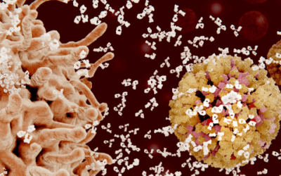 Πόσο καιρό κρατάει η ανοσία μετά από μόλυνση με COVID-19;